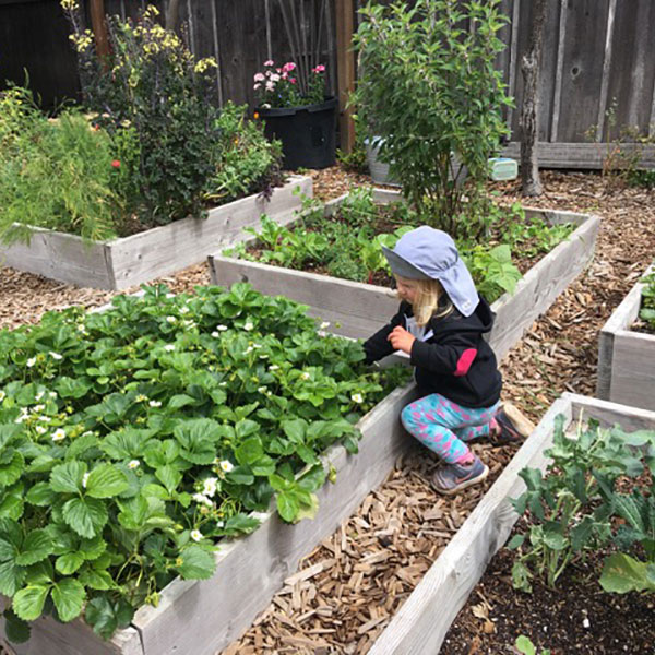 Children get to pick their own vegetables
